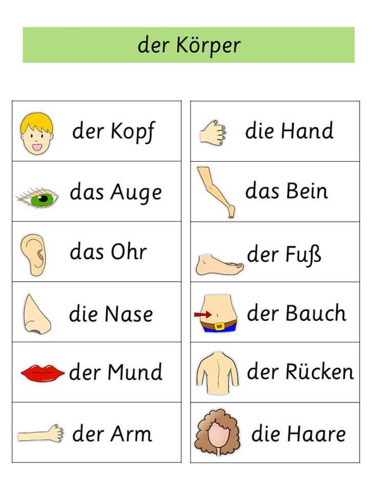 Nos organes allemands